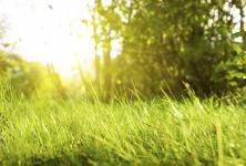 Sunshine in a meadow.